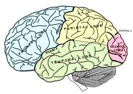 """It's My Brain"": Part 1"